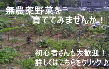 岩倉レンタル農園